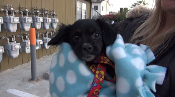 """""""Thanks to the Disney Blanketeers, our Hope For Paws rescue vehicle is now equipped with beautiful blankets that help us wrap these scared dogs & make them feel safe :-)"""""""
