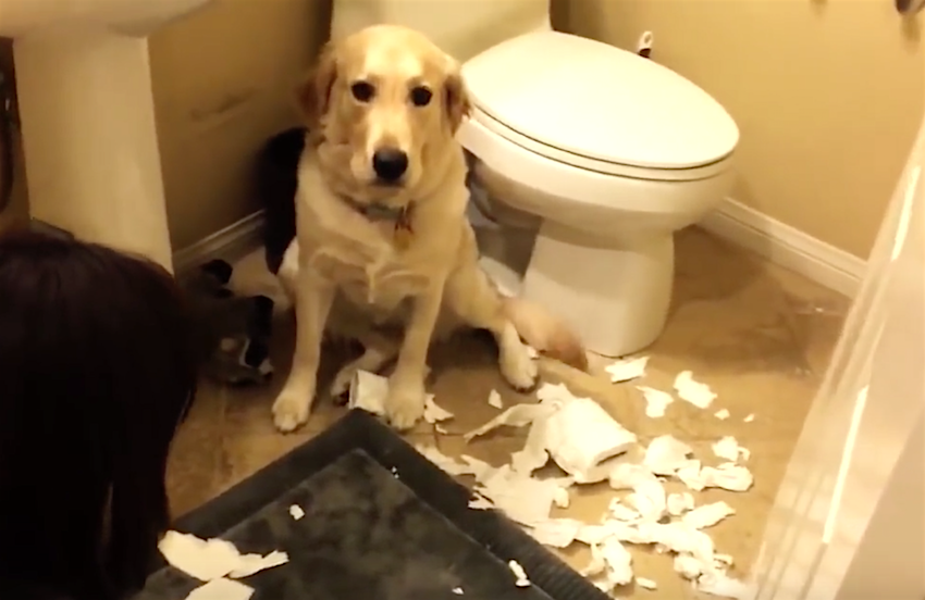 They're All Guilty, But Watch What This Dog Does… LOL ...