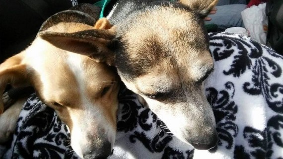 Booboo and Bambi ran from everyone who approached. But it was 100 Abandoned Dogs of Everglades Florida that was able to catch them with humane traps.