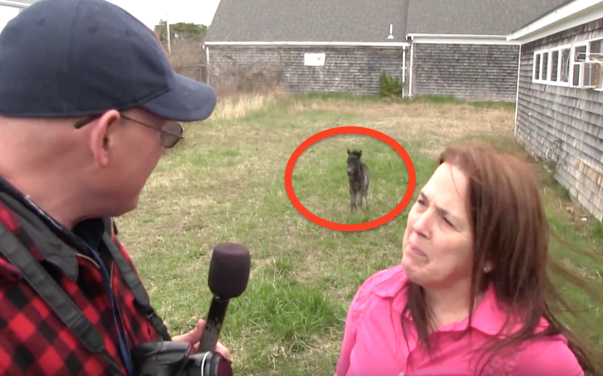 She's Giving An Interview About The Newborn Horse. Wait Till You See Him Up Close...