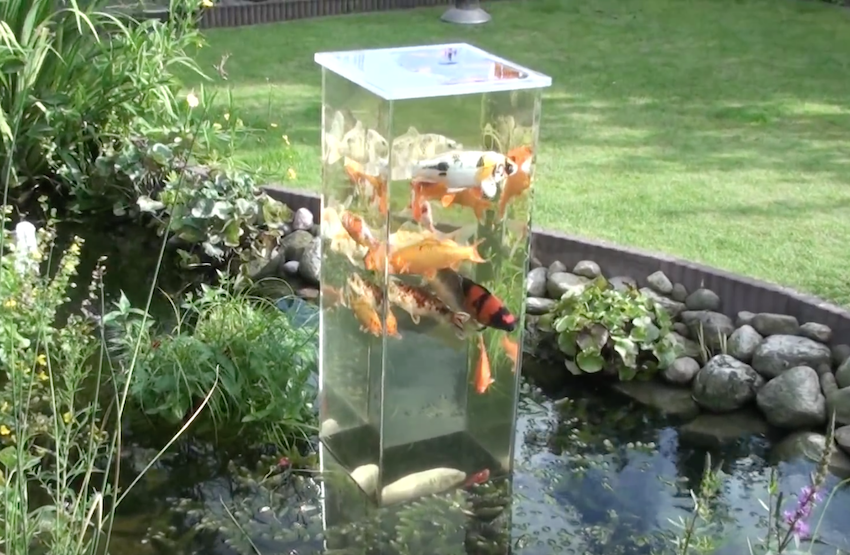 Upside down fish tank in koi pond for Fish pond setup