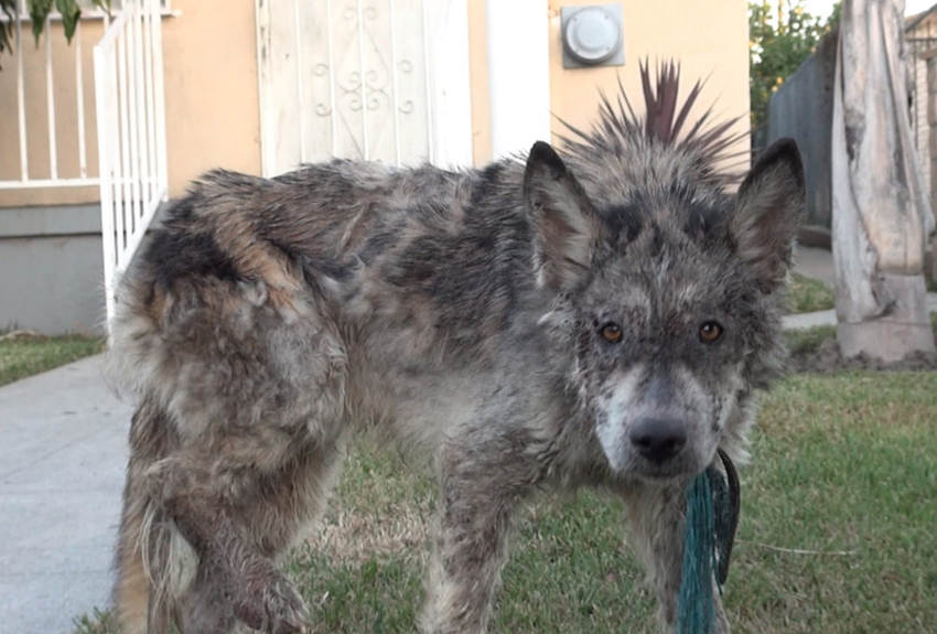 They think they're rescuing a neglected dog until they take a closer look