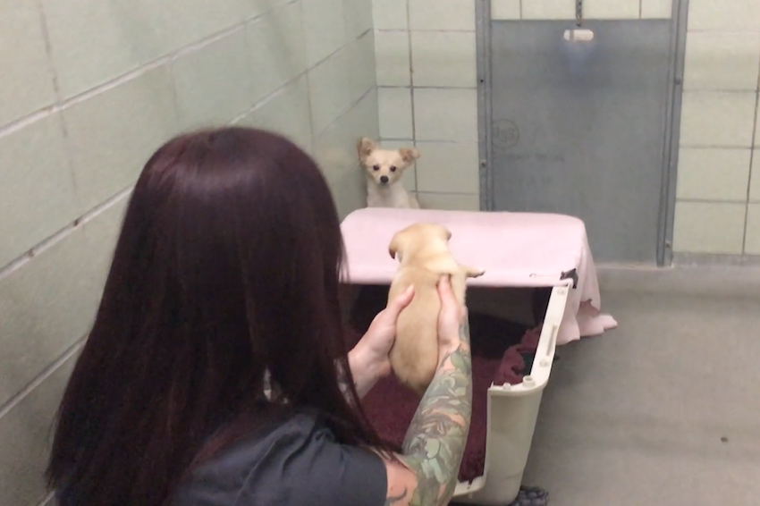 Scared dog sits in the corner of the shelter, but then she