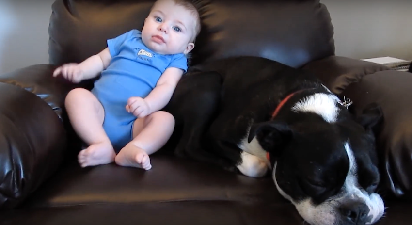 Dog Loves Sitting By His Baby Brother Until He Poops His