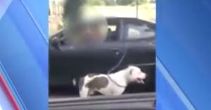 car walking dog