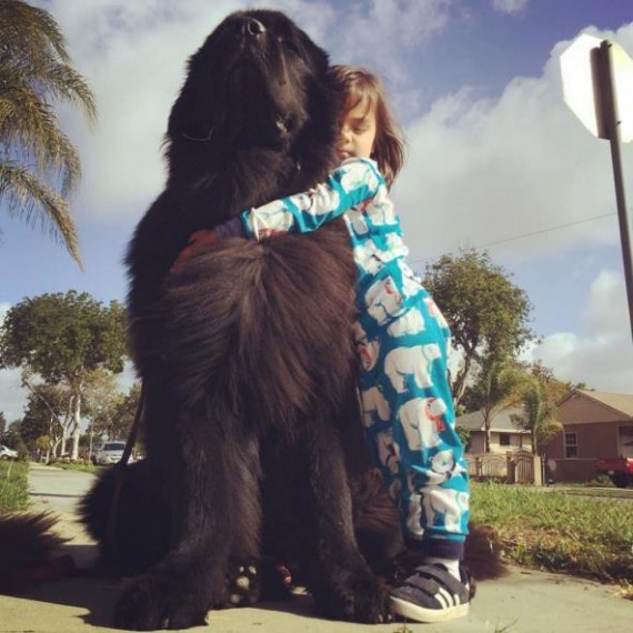 They brought Ralphie and Boss home, and the kids were blown away! Ralphie weighed in at 125 pounds and Boss at 160.