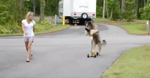 dog scooter