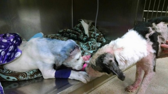Sammie, four-months-old, had been severely abused. He was dragged by a car, spray painted and shot.