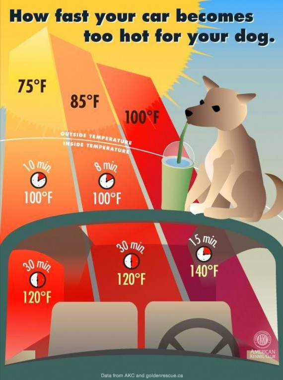 Just how long does it take for a car to reach unbearable temperatures on a hot day? Take a look at this chart.