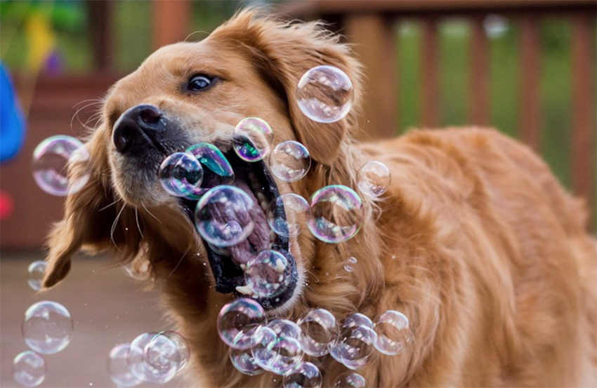 When These 17 Dogs See Bubbles, They Just Can't Contain