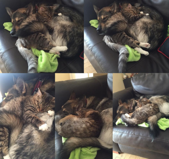 They love to do absolutely everything together, but napping is their favorite!