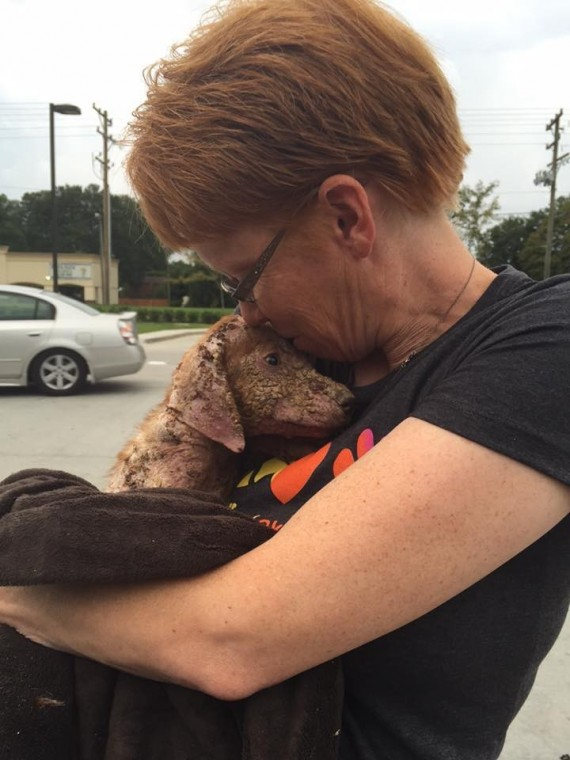 Animal control officers picked this puppy up off of the road after witnesses saw her being tossed out of a truck like trash. That's when Heidi Schermerhorn-Wagner stepped in.