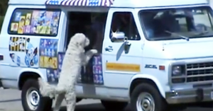 charlie the dog at ice cream truck