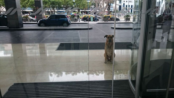 Flight attendant Olivia first met this stray dog during her flight to Argentina 6 months ago