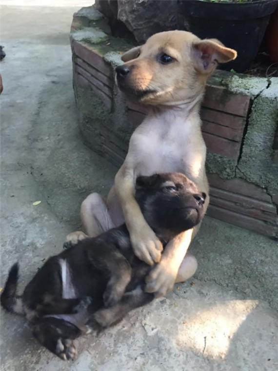 The bigger dog protected his little buddy by holding her closely.