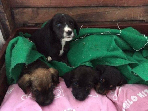 Founder of Juliana's Animal Sanctuary, Juliana Castañeda, found four puppies alone in the woods  and took them in.