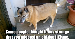 old dogs love