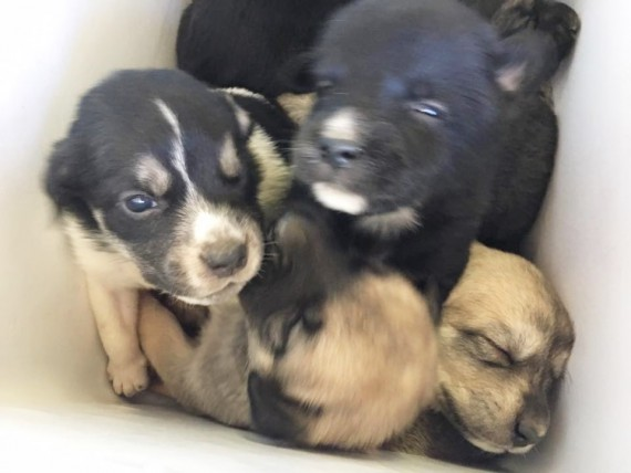 Nine puppies were crammed inside and covered in their own feces and urine. She immediately called animal control.