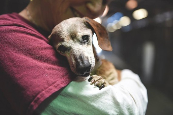 That's why when she met her very first person at the shelter, she didn't want to let go. Longtime volunteer Elaine Seamans came to visit Muneca, and the 18-year-old blind dog leapt into her arms.