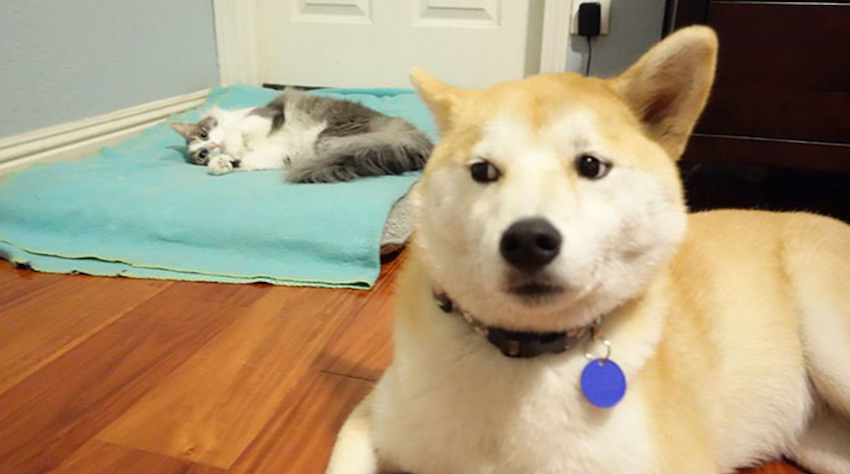 15 Bully Cats Just Stole Dog Beds And Aren T About To Give