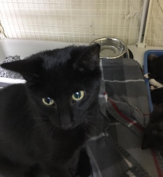 "The cat was doing its best to protect the abandoned kittens and even looked up at rescuers as if to say ""thank you."" They covered the bin with a blanket and took them back to the shelter."