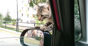 climbs into car