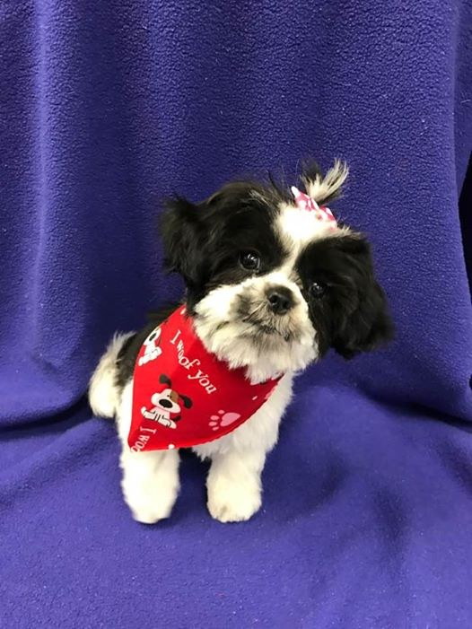 After all of the drama, Oreo's looking great with her new 'do!