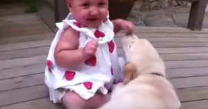 puppy baby reaction
