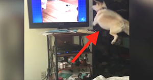 dogs on tv