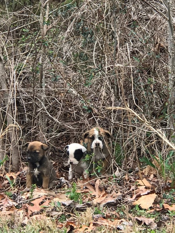 """""""TFC1 Ennis was in southwest Atlanta yesterday in a known stolen car dumping ground. He was driving in an abandoned subdivision when he saw three puppies that had been dumped in a briar patch."""""""