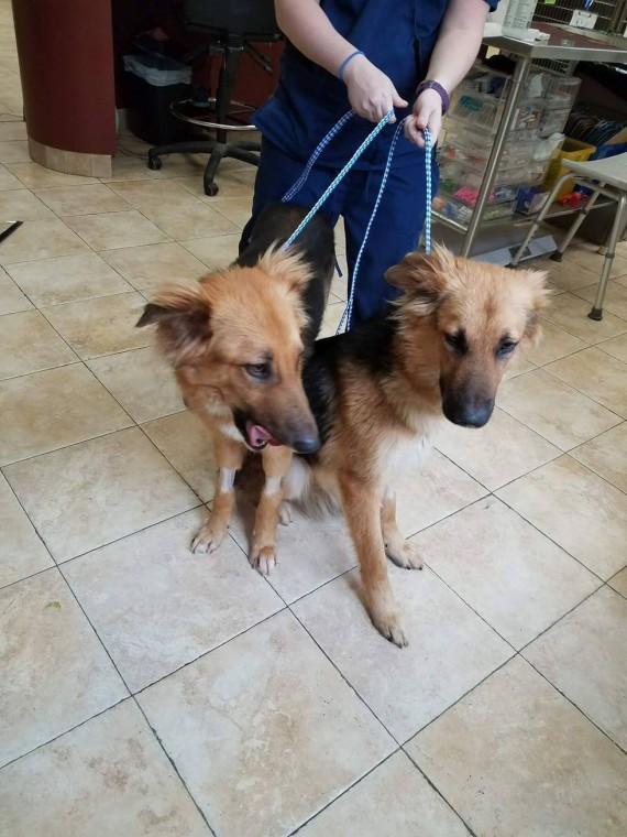 Dog Best Friends Hug Each Other At The Shelter - These two stray puppies were just rescued and they refuse to stop hugging each other