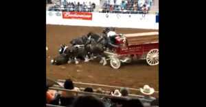 clydesdale accident