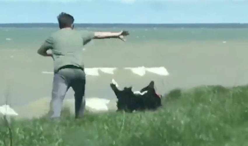 Man's walking his dog near the water, but the dog doesn't ...