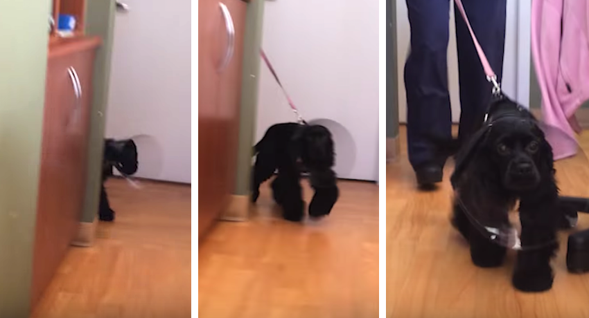 Their Blind Dog Just Got Surgery To Fix Her Eyes Now